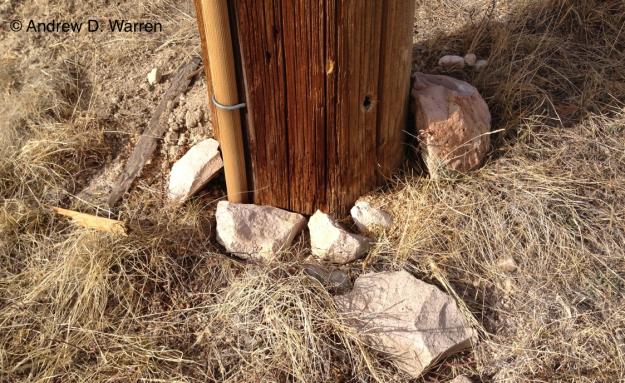 These rocks, along the ridge near Hidden Pointe, almost always provide some neat arthropod surprises, no matter the season!